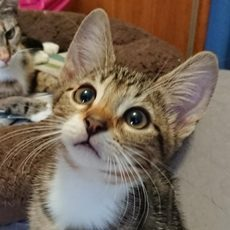 Gilligan's Island Kittens