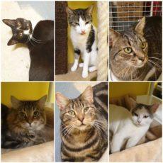 Cats, cats & more cats :)