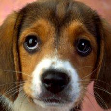 Albury Wodonga Animal Rescue